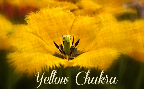 Yellow Chakra